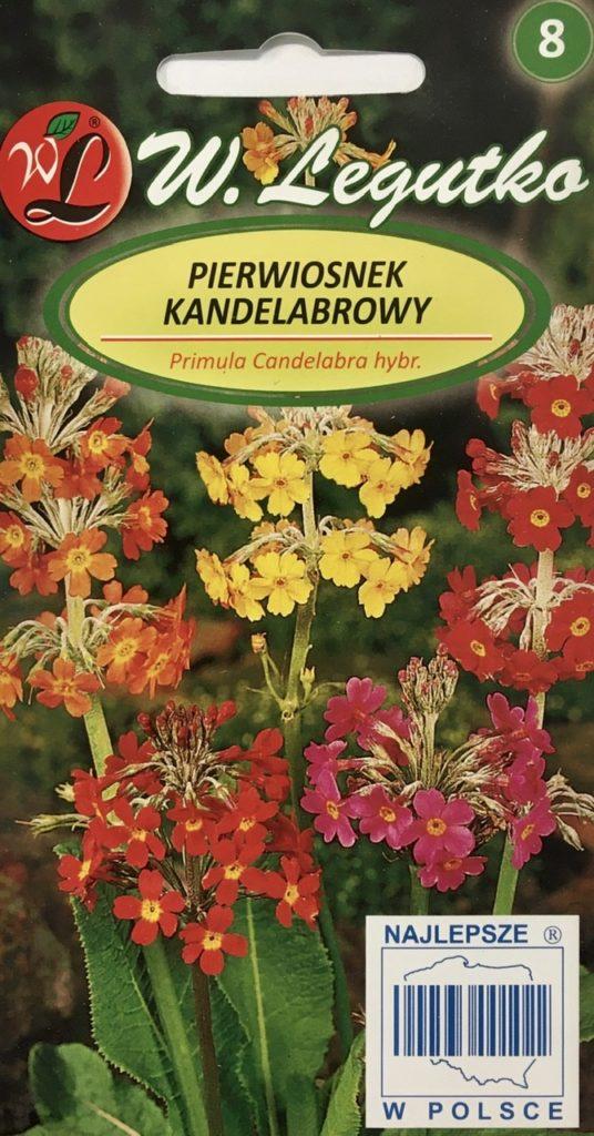 Pierwiosnek Kandelabrowy