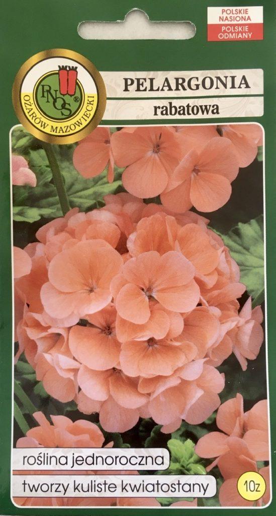 Pelargonia rabatowa