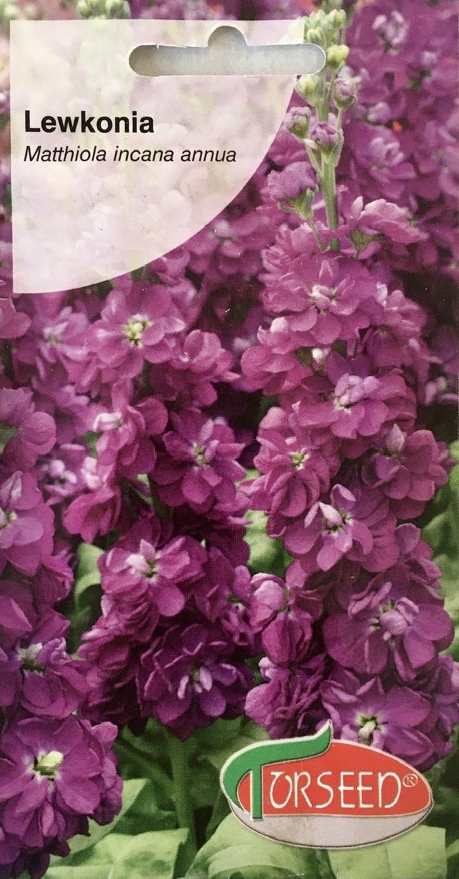 Lewkonia fioletowa