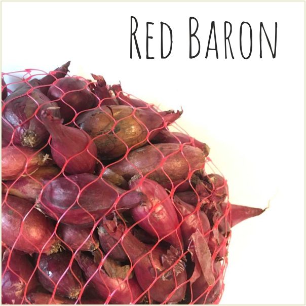 Dymka Red Baron