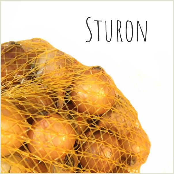 Dymka Sturon
