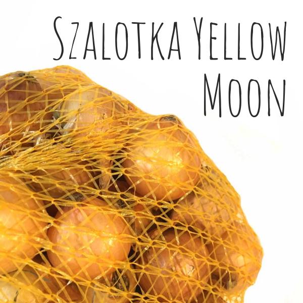 Dymka szalotka Yellow Moon