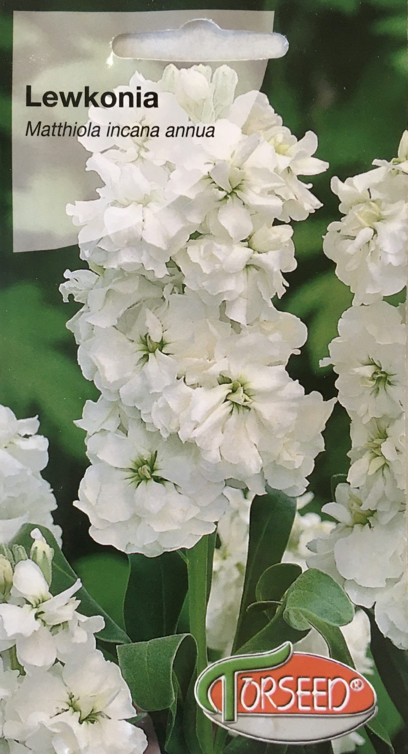 Lewkonia biała
