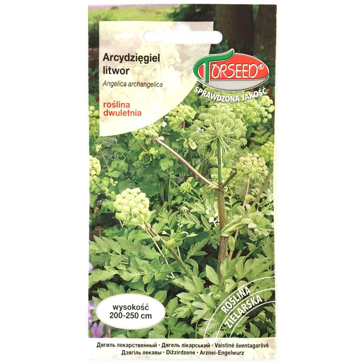 Arcydzięgiel litwor nasiona Torseed