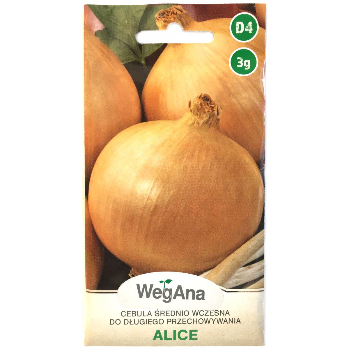 Cebula Alice nasiona WegAna