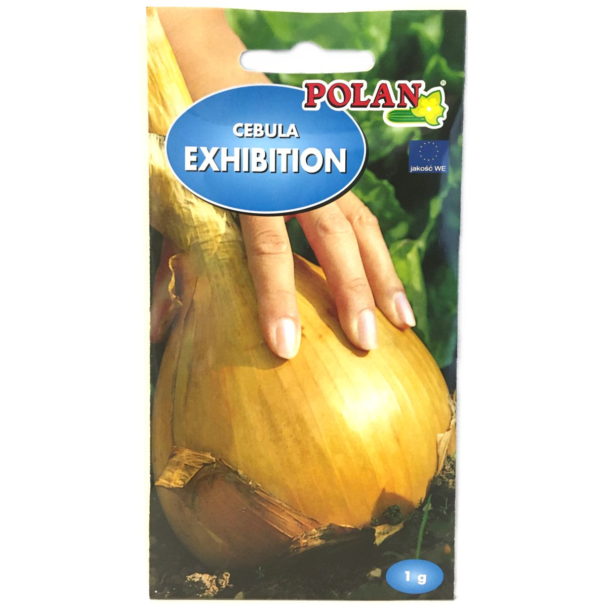 Cebula Exhibition nasiona Polan