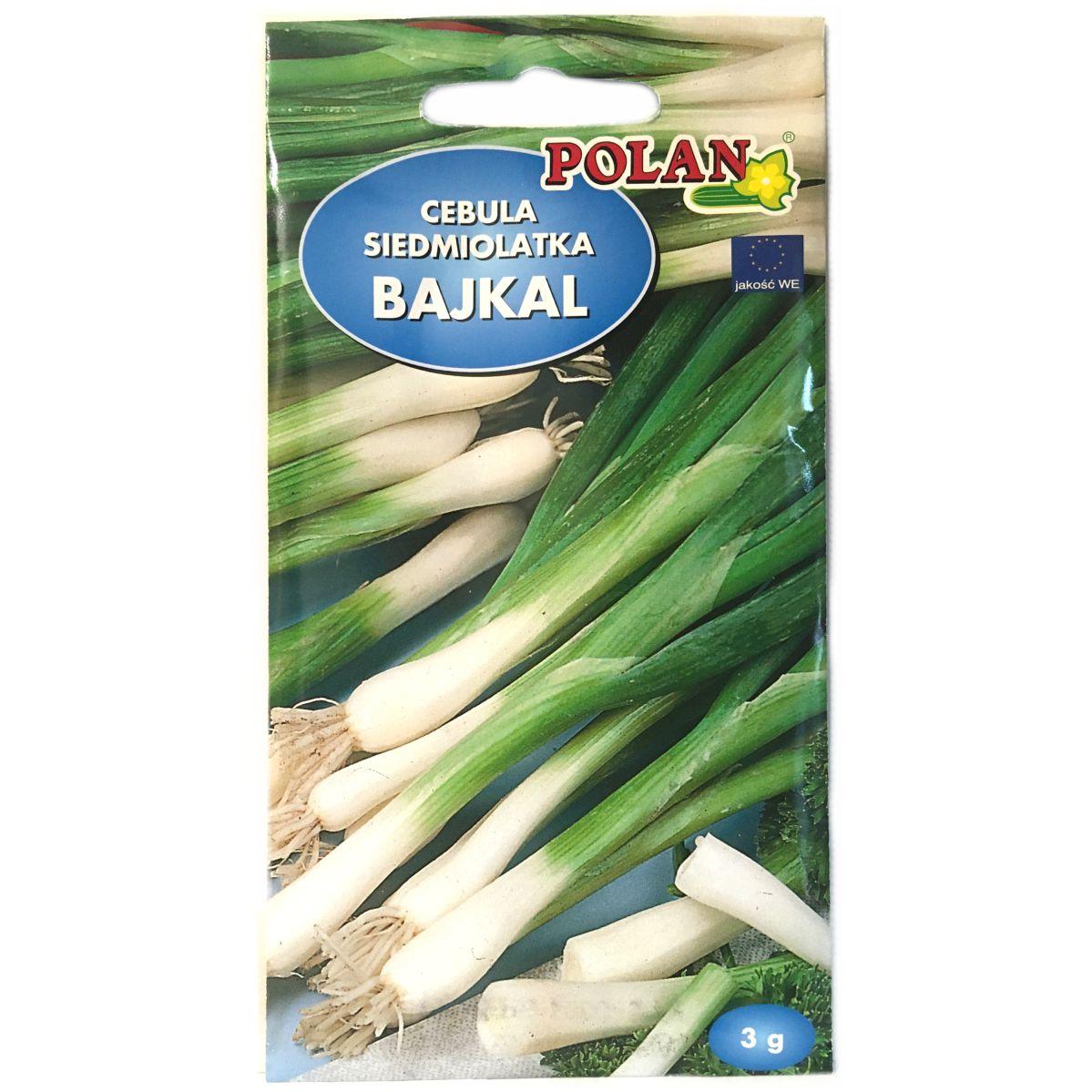 Cebula siedmiolatka Bajkal nasiona Polan
