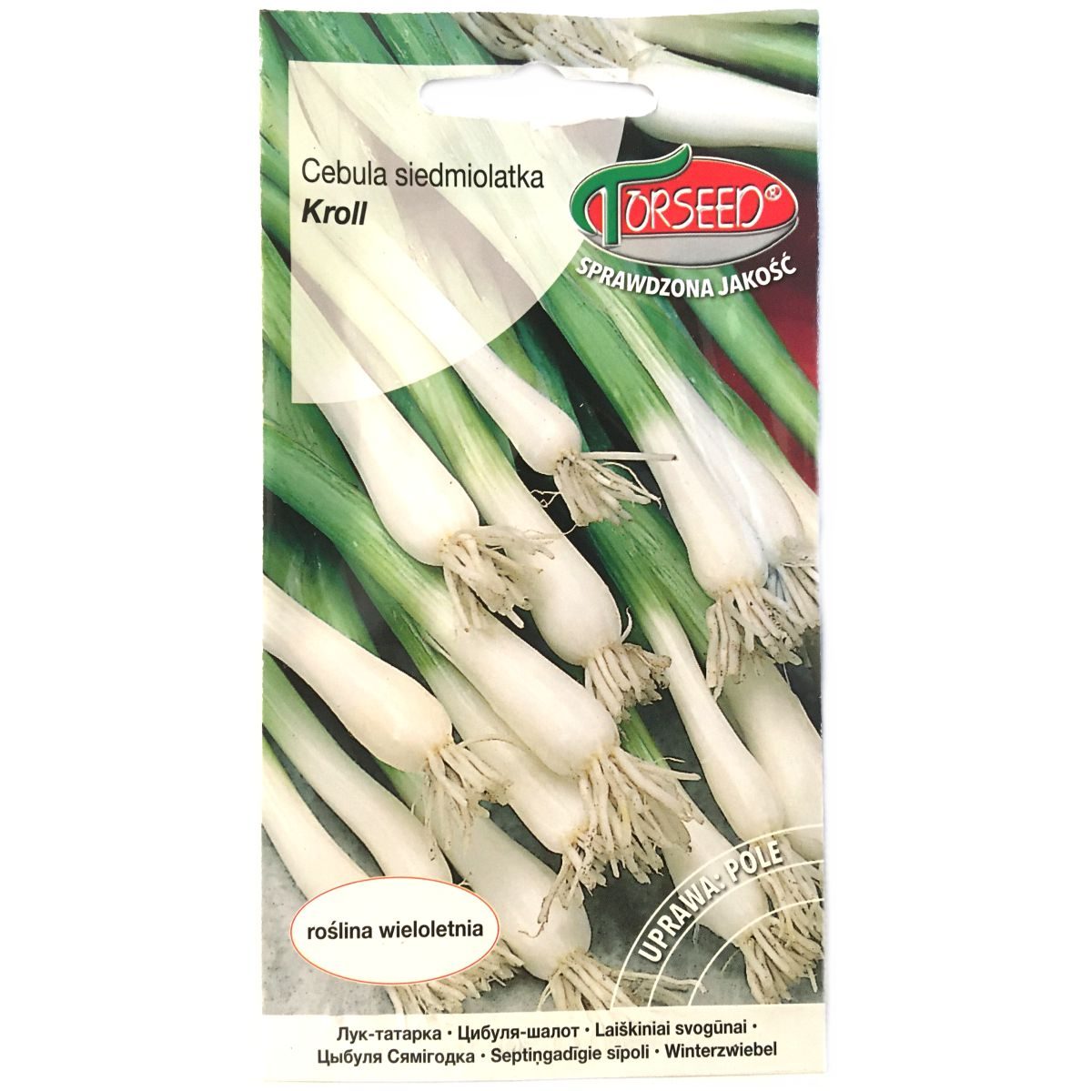 Cebula siedmiolatka Kroll nasiona Torseed