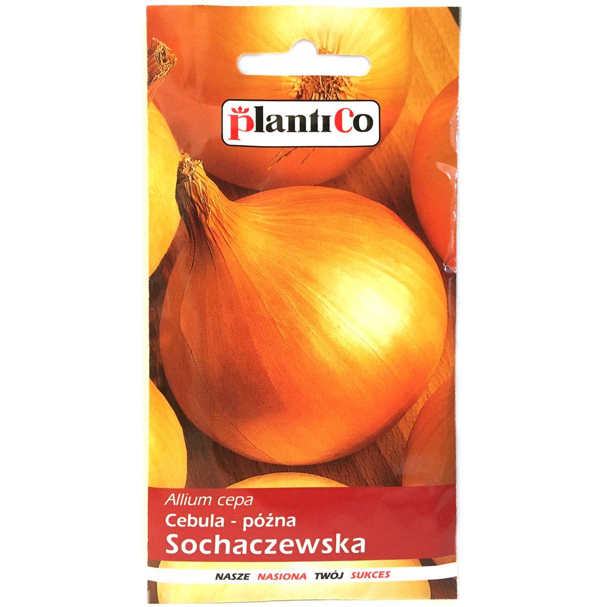 Cebula Sochaczewska nasiona Plantico