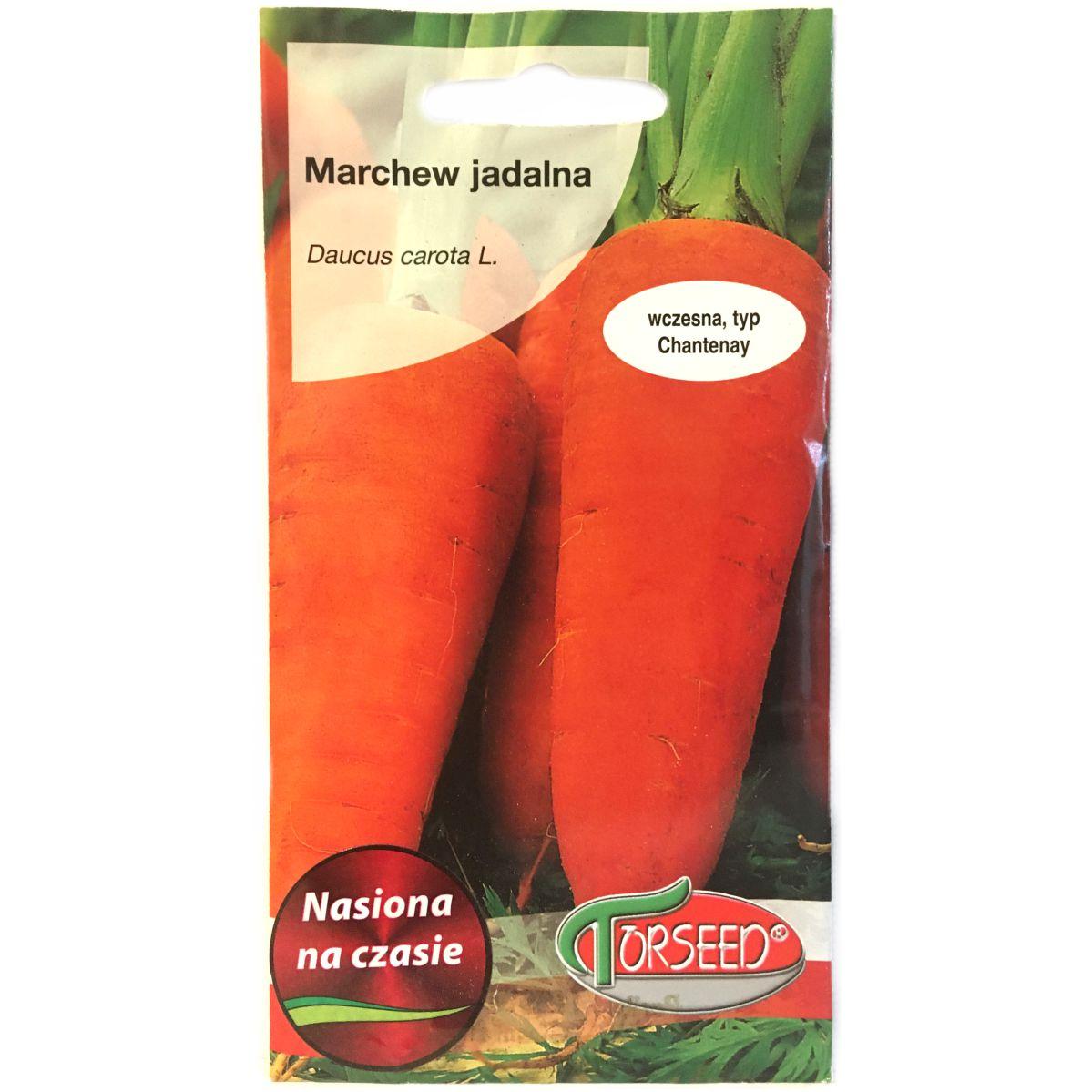 Marchew Chantenay nasiona Torseed