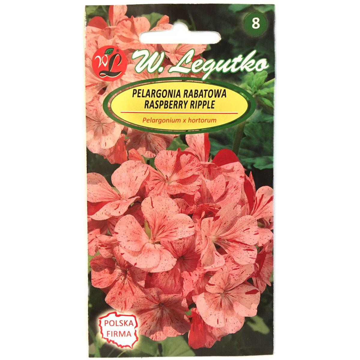 Pelargonia rabatowa Raspberry Ripple Divas F1 nasiona Legutko