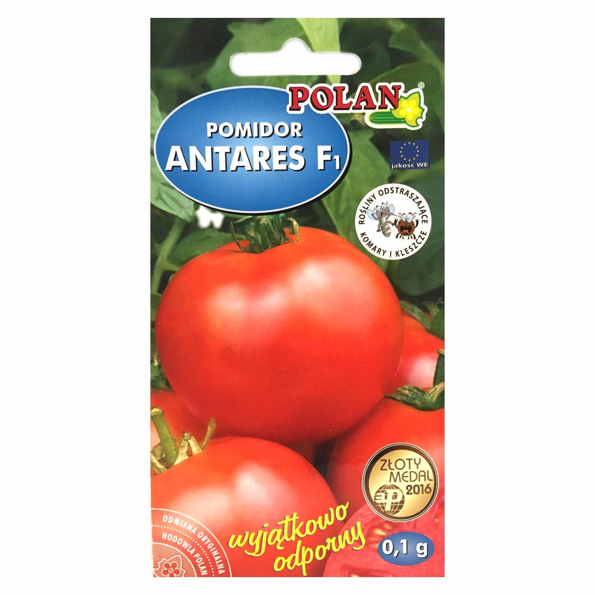Pomidor Antares F1 nasiona Polan