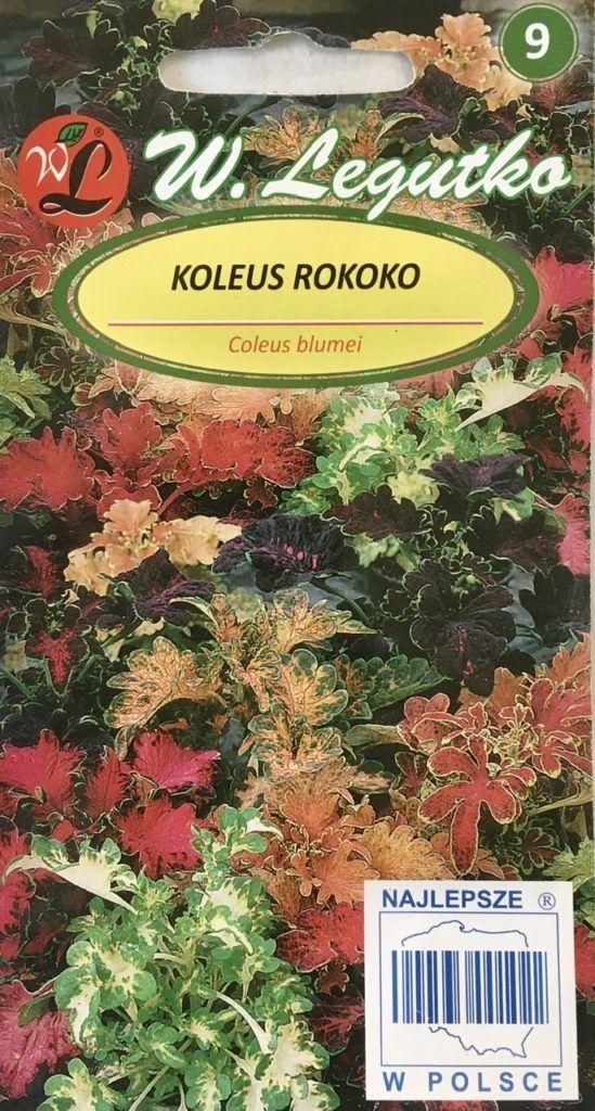Koleus Rokoko