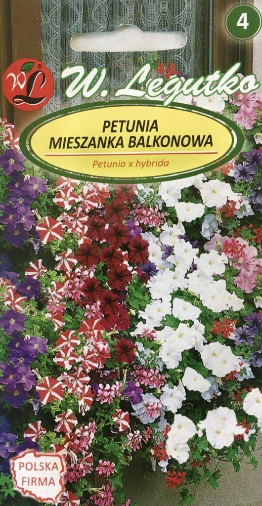 Petunia balkonowa
